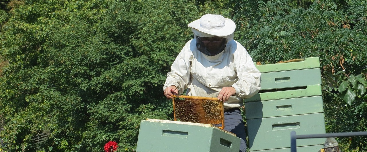 Ревизия семьи пчел