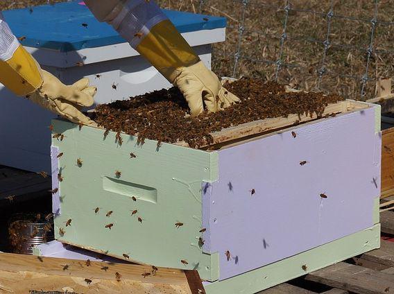 Товары для пчеловодов
